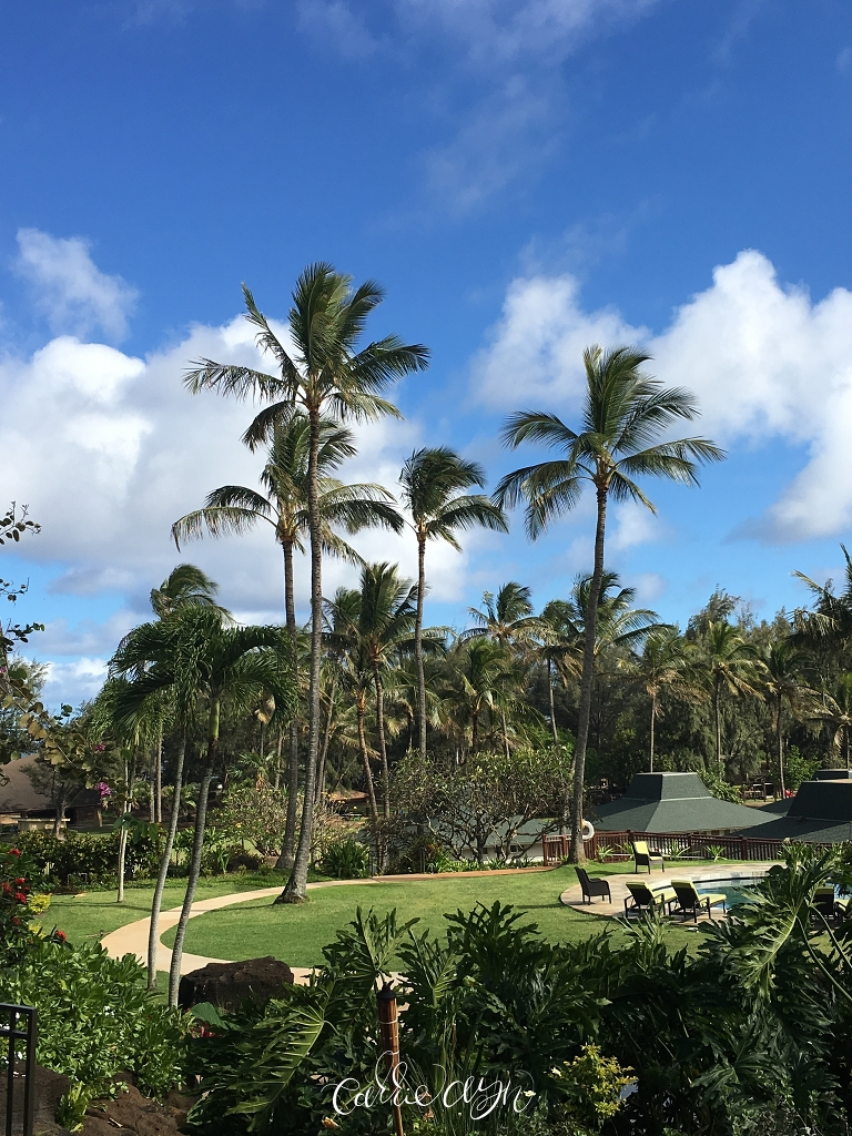 hawaii vacation essay In contrast to maui and oahu the island of kauai is a quieter place to vacation if your dream vacation involves feeling secluded and away from busy tourist centers, kauai is an ideal choice.